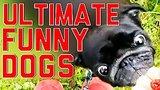 видео 6 мин. 20 сек. Компиляция конечной Смешные собаки по FailArmy раздел: Юмор, развлечения добавлено: 17 июня 2015