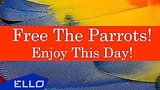 ����� 2 ���. 35 ���. Free The Parrots! - Enjoy This Day! / ELLO UP^ / ������: ������, ����������� ���������: ������� 30 ���� 2016