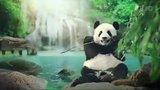 видео 29 сек. Реклама Libero - Либеро Зоопарк раздел: Рекламные ролики добавлено: 6 сентября 2016