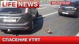 видео 25 сек. Неравнодушные москвичи спасают утят раздел: Новости, политика добавлено: 24 июня 2015