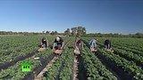 видео 2 мин. 9 сек. Рабы «солнечного штата»: во Флориде нелегальные мигранты трудятся в нечеловеческих условиях раздел: Новости, политика добавлено: 27 июня 2015