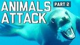видео 7 мин. 29 сек. Когда животных атаковать компиляции часть 2 FailArmy раздел: Юмор, развлечения добавлено: 1 июля 2015