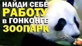 видео 14 мин. 2 сек. Галилео. Найди работу в Гонконге. Зоопарк раздел: Технологии, наука добавлено: 1 июля 2015