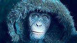 видео 3 мин. 37 сек. Планета обезьян: Война — Русский фрагмент #2 (2017) раздел: Кино, ТВ, телешоу добавлено: 17 июня 2017
