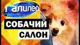 видео 6 мин. 58 сек. Галилео. Собачий салон ? Canine salon раздел: Технологии, наука добавлено: 23 июня 2017