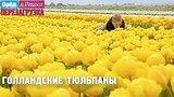 видео 44 сек. Самый большой букет тюльпанов! Орёл и Решка. Перезагрузка раздел: Путешествия, страны, города добавлено: 25 июня 2017