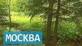видео 2 мин. 32 сек. Лес или промзона: судьбу островка природы под Солнечногорском решит арбитраж раздел: Новости, политика добавлено: 2 июля 2015