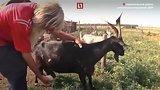 видео 6 мин. 30 сек. Отшельник из ДНР Дядя Миша раздел: Новости, политика добавлено: 26 июля 2017