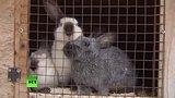 видео 1 мин. 15 сек. В Австрии учитель убил и расчленил кролика на глазах у детей раздел: Новости, политика добавлено: 3 июля 2015