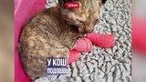 видео 46 сек. Котёнка спасли в пожаре в Британии раздел: Новости, политика добавлено: 5 августа 2017