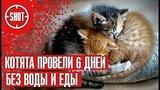видео 1 мин. 26 сек. Котята провели 6 дней без воды и еды раздел: Новости, политика добавлено: 11 августа 2017