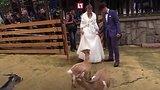 видео 1 мин. 19 сек. Первая свадьба в московском зоопарке раздел: Новости, политика добавлено: 1 октября 2017
