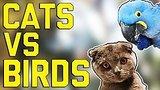 видео 5 мин. 46 сек. Кошки против птиц: FailArmy против (октябрь 2017) FailArmy раздел: Юмор, развлечения добавлено: 8 октября 2017