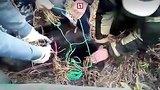 видео 1 мин. 14 сек. Маленького медвежонка скрутили, как преступника рецидивиста раздел: Новости, политика добавлено: 18 октября 2017