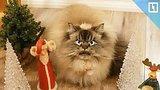 видео  Самый сердитый кот в мире раздел: Новости, политика добавлено: вчера 13 декабря 2017