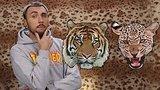 видео 10 мин. 25 сек. +100500 - Как Выжить При Встрече с Леопардом и Тигром раздел: Юмор, развлечения добавлено: 20 января 2018