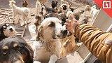 видео 46 мин. 59 сек. Приютил 200 собак раздел: Новости, политика добавлено: 20 апреля 2018