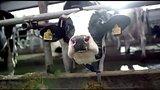 видео  Реклама Макдональдс - Фермер 2015 раздел: Рекламные ролики добавлено: 13 июля 2015