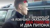 видео 1 мин. 16 сек. Львица жила в обычном автомобиле раздел: Новости, политика добавлено: вчера 21 июня 2018
