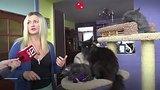 видео 1 мин. 25 сек. Кошка с человеческим лицом раздел: Новости, политика добавлено: 11 июля 2018
