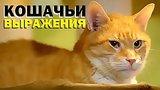 видео 6 мин. 38 сек. Галилео. Кошачьи выражения раздел: Технологии, наука добавлено: 14 июля 2015
