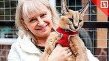 видео  Рыси вместо домашних кошек раздел: Новости, политика добавлено: 8 октября 2018