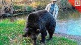 видео 32 мин. 13 сек. Медведь Тоша – новая звезда интернета раздел: Новости, политика добавлено: 16 октября 2018