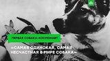 видео 2 мин. 30 сек. Полет и гибель первой собаки-космонавта раздел: Новости, политика добавлено: 6 ноября 2018