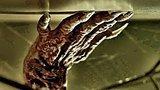 видео 1 мин. 56 сек. Суспирия — Русский фрагмент (2018) раздел: Кино, ТВ, телешоу добавлено: 28 ноября 2018
