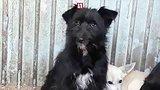 видео 1 мин. 13 сек. Сотни животных могут умереть в ветприемнике Челябинска раздел: Новости, политика добавлено: 14 декабря 2018
