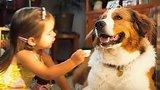видео 2 мин. 57 сек. Собачья жизнь 2 — Русский трейлер (2019) раздел: Кино, ТВ, телешоу добавлено: 7 марта 2019