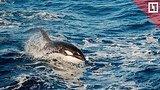 видео 1 мин. 49 сек. Из «китовой тюрьмы» освободят 100 косаток и белух раздел: Новости, политика добавлено: 8 апреля 2019