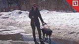 видео 1 мин. 47 сек. Пьяный избил слепого пенсионера и его собаку-поводыря раздел: Новости, политика добавлено: 12 апреля 2019
