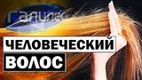 видео 4 мин. 50 сек. Галилео | Человеческий волос ? [Human hair] раздел: Технологии, наука добавлено: 12 мая 2019