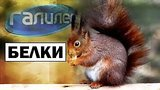 видео 3 мин. 22 сек. Галилео | Белки ? [Squirrels] раздел: Технологии, наука добавлено: 23 июня 2019