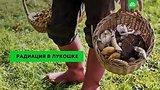видео 2 мин. 1 сек. Радиоактивные ягоды и грибы: как избежать заражения раздел: Новости, политика добавлено: 9 августа 2019