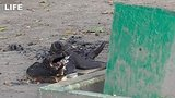 видео 1 мин. 17 сек. Мужчина поджёг человека и убежал раздел: Новости, политика добавлено: 22 августа 2019