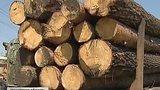 видео 5 мин. 31 сек. Почему Россия не может победить черных лесорубов раздел: Новости, политика добавлено: 27 июля 2015