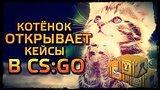 видео 12 мин. 11 сек. КОТЁНОК ОТКРЫВАЕТ КЕЙСЫ В CS:GO раздел: Игры добавлено: 4 августа 2015