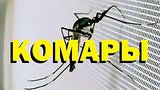 видео 8 мин. 36 сек. Галилео. Комары раздел: Технологии, наука добавлено: 6 августа 2015