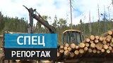 видео 12 мин. 7 сек. Темный лес. Специальный репортаж Алины Темновой раздел: Новости, политика добавлено: 16 августа 2015