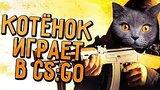 видео 39 сек. КОТЁНОК ИГРАЕТ В CS:GO раздел: Игры добавлено: 20 августа 2015
