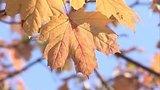 видео 1 мин. 53 сек. Доброе утро. Погода на осень – чего ждать? (01.09.2015) раздел: Новости, политика добавлено: 1 сентября 2015